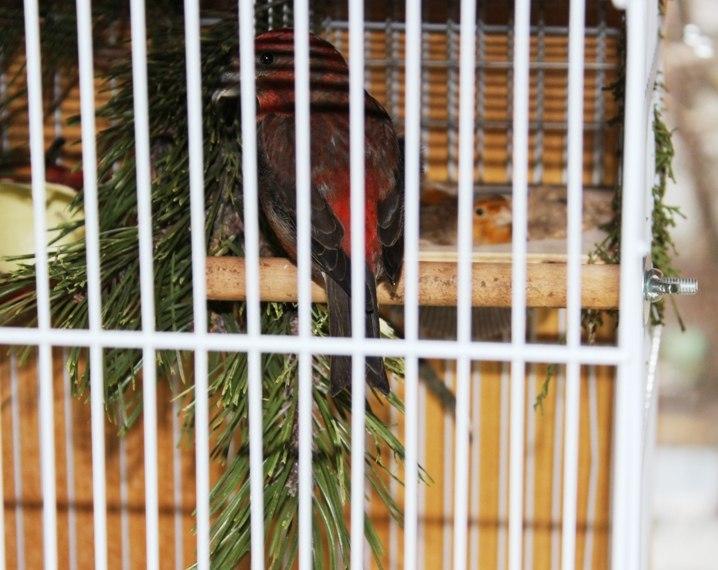 """Фотографии """"птичей комнаты""""  Gij3fbraJoc"""