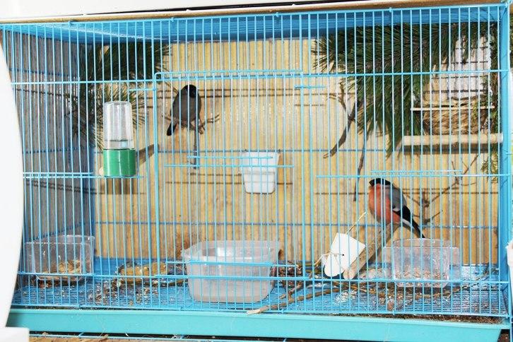 """Фотографии """"птичей комнаты""""  2-7jm3TNFh4"""