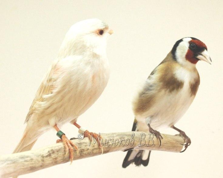 Фотографии моих птиц  TIMev1nLJY8