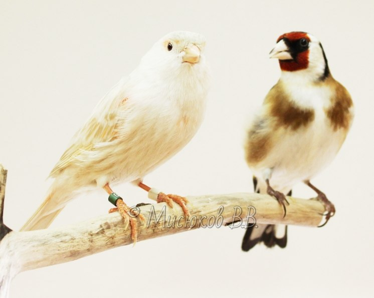 Фотографии моих птиц  G-IpEd56BpA