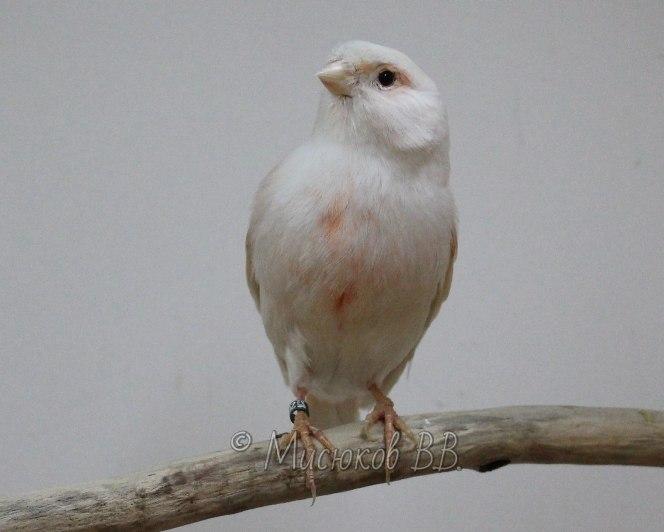 Фотографии моих птиц  _HI1dKwvQ7c