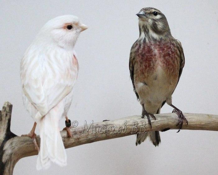 Фотографии моих птиц  Nesa348396Q