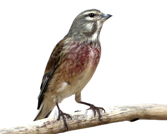 Фотографии моих птиц  -yVz9AEDj3I