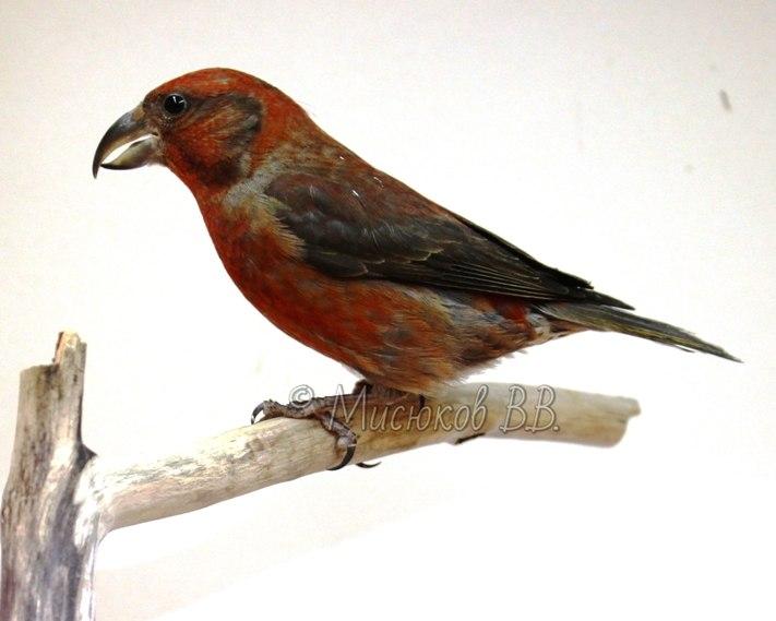 Фотографии моих птиц  NCmwdMrqkQE