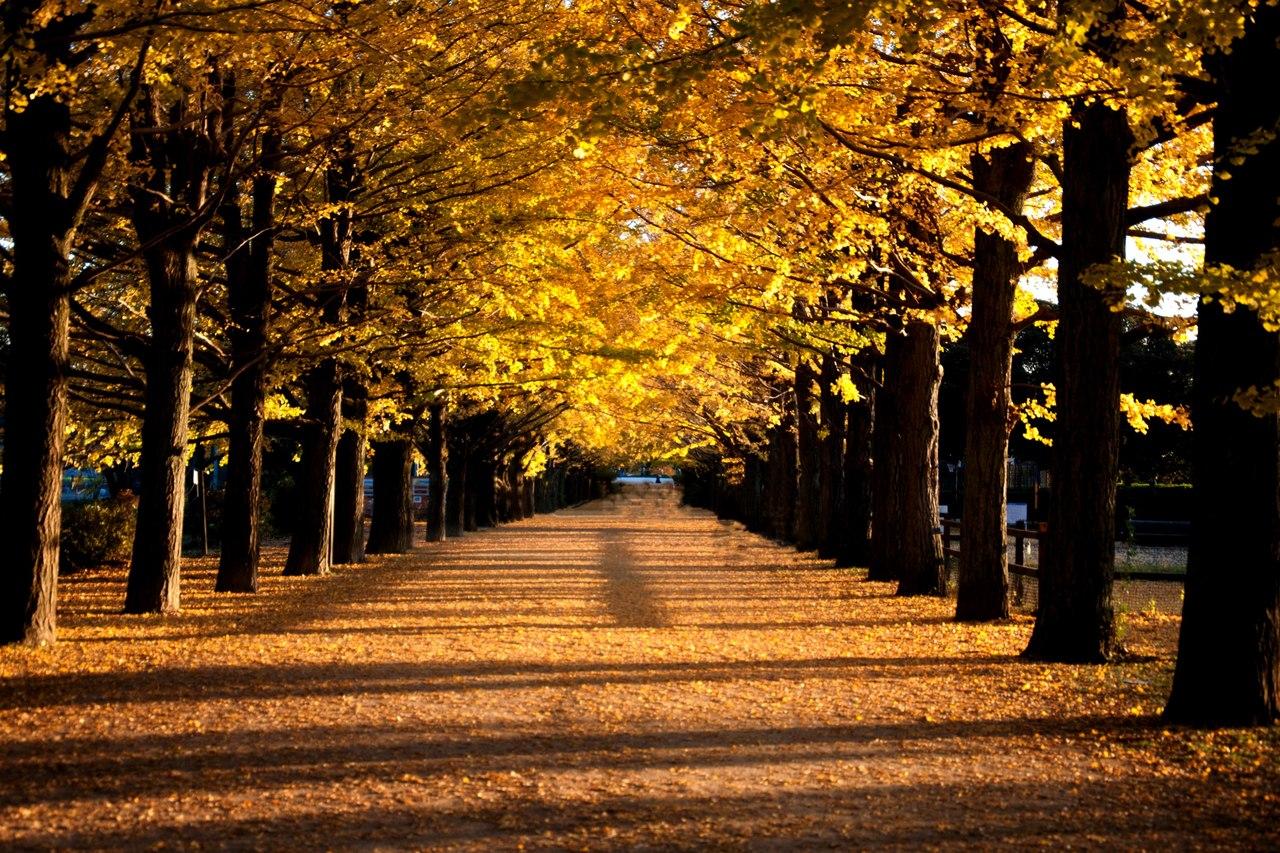Autumn time ... - Pagina 2 LF3PIDyoV-w