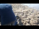 Дегтярское болото