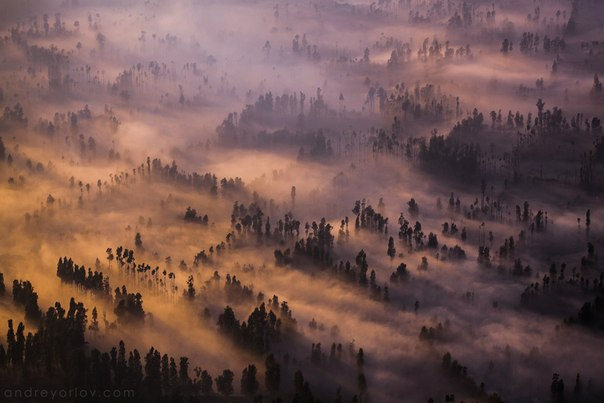 Туманный рассвет в районе вулкана Бромо. Остров Ява, Индонезия. Автор фото: Андрей Орлов.