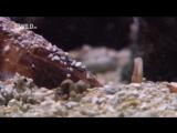 Самые Странные в Мире Животные Чудаки в Океане Документальный Фильм National Geographic (1)