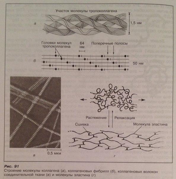 Миогемоглобинурия