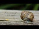 Cygna - Broken Dream Of A Little Snail