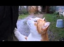 Кошки самые умные животные