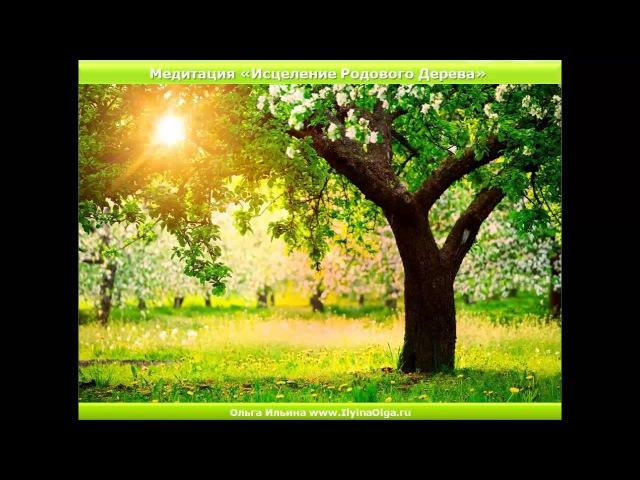 Медитация Исцеление Родового Дерева