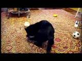 Cat vs Ermine  Кот и горностай ))