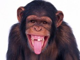 Смешные животные до слез, смешные видео про животных