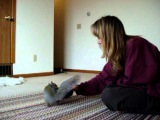 Cutest Pet Video EVER! Taz Squirrel plays with toys like a puppy