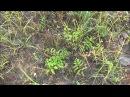 Сибирь 2014 Подкаменная тунгуска 2