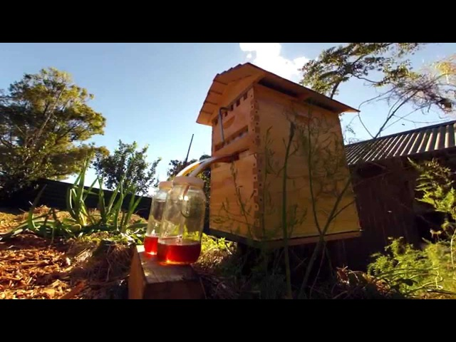 Flow™ Hive Time Lapse Honey Harvest