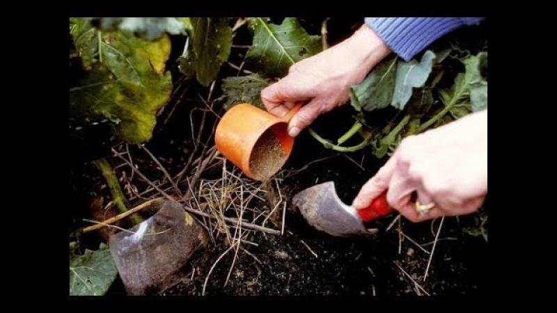 Удобрения для огорода — зола древесная
