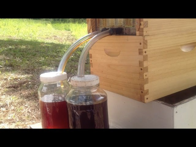 Flow Hive - Don Anderson Harvesting Honey