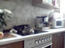 Никифор кот-грубиян - огрызается, несуразно выражается, спорит с хозяйкой - MUST SEE! [OFFICIAL]