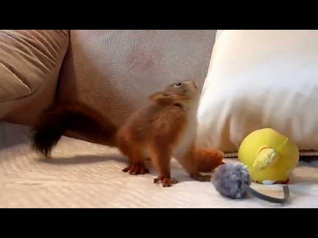 Знакомьтесь - бельчонок Пуш. little squirrel Posh.