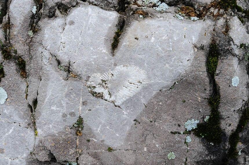 Коралл каменноугольного возраста на скале Орёл
