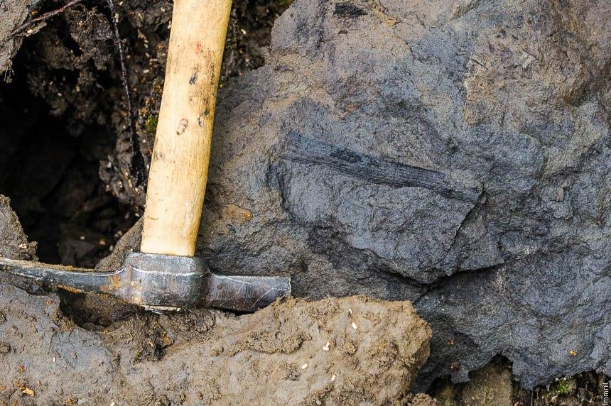 Отпечаток растения в камне