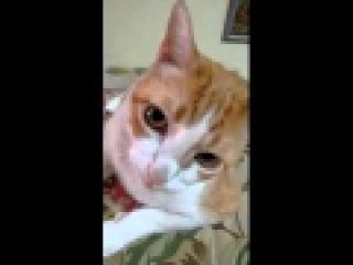 Sahibiyle Şarkı Söyleyen Kedi