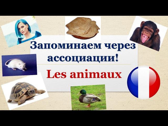 Урок113: Как легко запоминать французские слова? Животные - les animaux