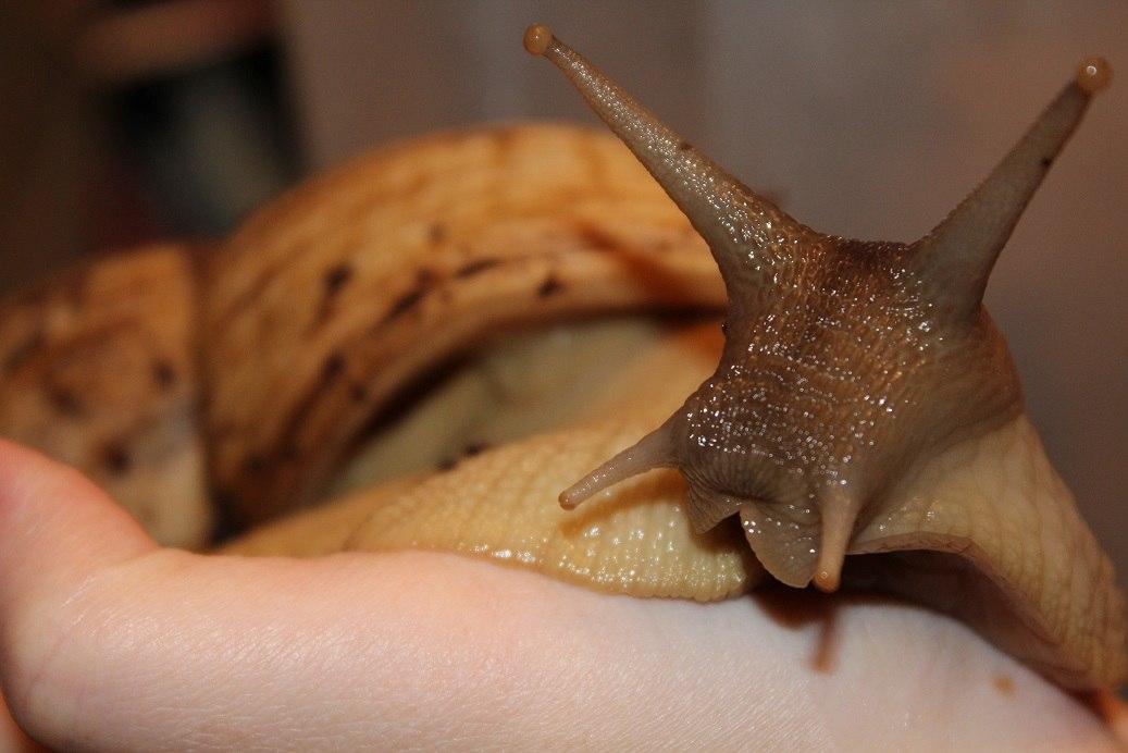 ~liquid snails~ - Страница 3 6_qtYSKSIbw