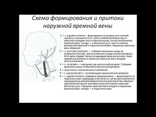 Вены головы и шеи.pptx