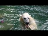 Vlog: прогулка по Новосибирскому зоопарку. Часть 1.