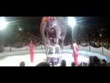 Могилев: слон упал с двухметровой высоты во время представления в цирке шапито