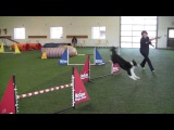 One Mind Dog Seminar (Janita Leinonen &amp Jaakko Suoknuuti) Chris &amp Wow!