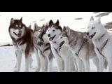 «Белый плен» (2005): Трейлер