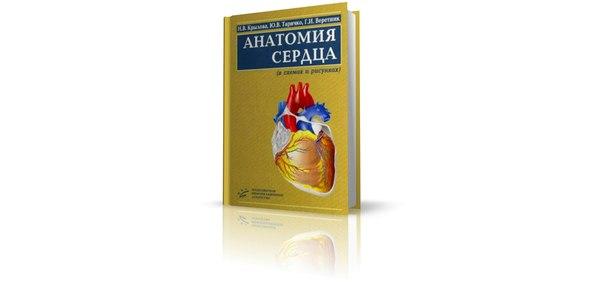«Анатомия сердца (в схемах и