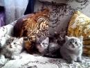 Понькины котята:) мимими:) Синхронные котики:)