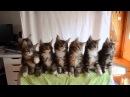 7 милых котят! Котята синхронно двигаются)))