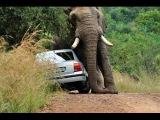 Самые опасные убийцы - Ужасные нападения животных на людей - Уникальные кадры / Премьера 2014 /