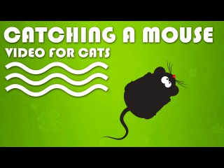 ENTERTAINMENT VIDEO FOR CATS. Cat Game on Screen. Catching a Mouse.