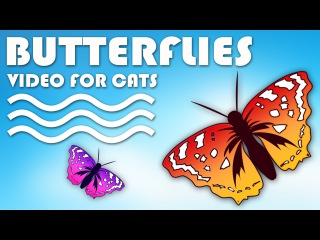 CAT GAMES ON SCREEN - Catching Butterflies. Entertainment Video for Cats to Watch.
