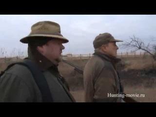 Охота на фазана с легавой / Pheasant hunting . 2017