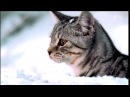 Реклама Whiskas   Вискас Новогодняя - Такого снегопада..