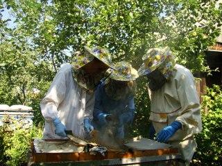 Жизнь нашей пасеки или практическое пчеловодство