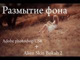 Урок по photoshop CS6 с плагином Alien Skin Bokah 2 , Размытие фона, 85 1.8 ,85 1.4,85 1.2