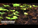 Carbon Based Lifeforms Photosynthesis World of Sleepers