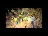 Подводный мир Океана: Мир спокойствия
