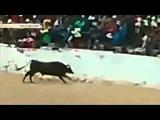 Дикий бык прыгнул в толпу зрителей в Перу