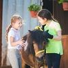 """Пони-клуб """"Верона"""". Пони и миниатюрные лошади."""