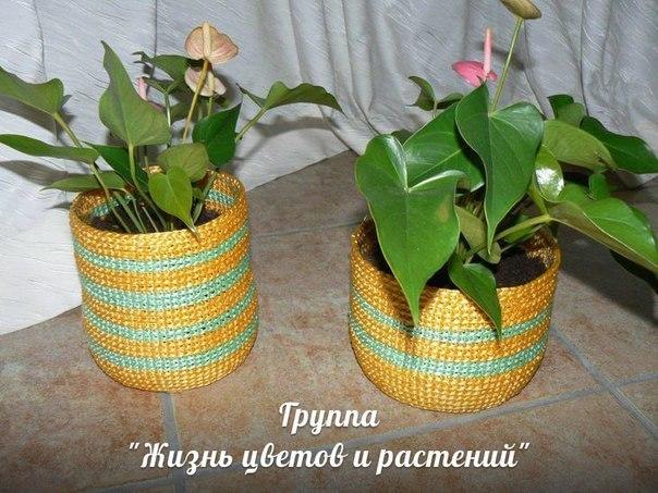 Лимон в домашних условиях » Фазенда-онлайн / сайт